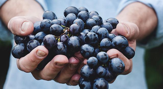 uvas fruta