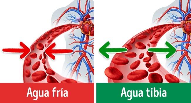 sistema sanguíneo