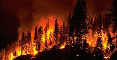 incendio bosques