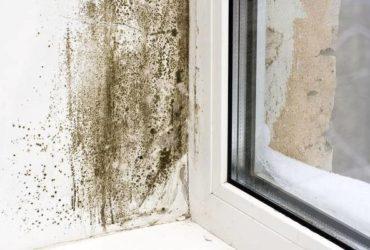 ventanal humedo
