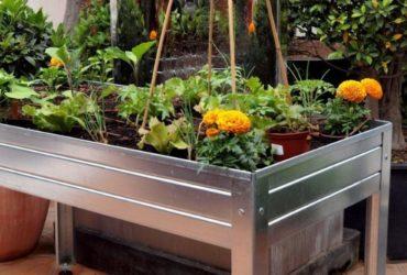 huerto de plantas