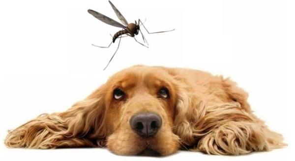 perro y mosquito