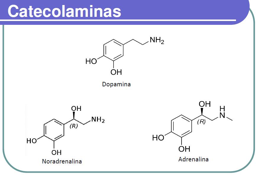catecolaminas quimica