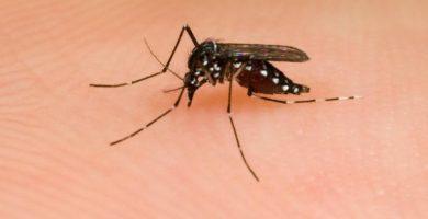 Cura las picaduras de mosquitos con estos simples pasos