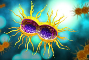 virus organico